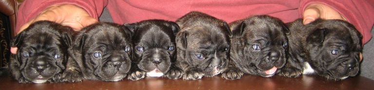 Doug's Litter with Gena in 2010 - The Royal 6 Pack