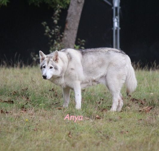 Our first Northern Inuit Anya