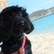 Vacation Happiness in Greece , Channel the Greek to me dog , Elafonisos