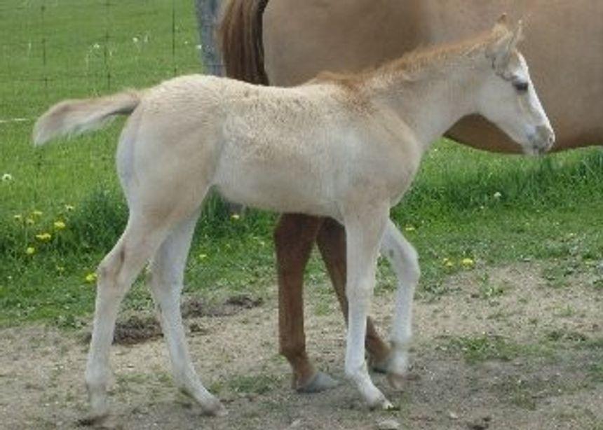 9 weeks old