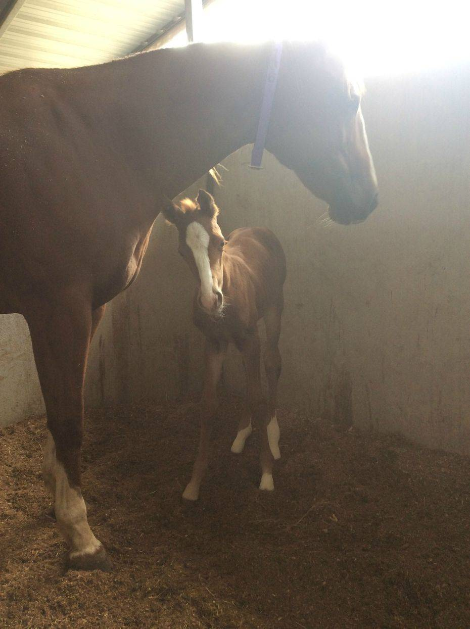 Stoli x Go On Secret. Filly. Owned by PBK Farms.