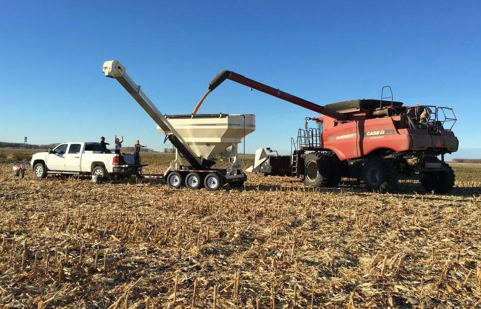 Grygla Seed Corn Plot
